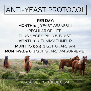 Suggested Anti-Yeast Protocol from Beeyoutiful.com