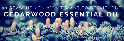 10 Reasons You Won't Want To Be Without Cedarwood #EssentialOil from Beeyoutiful.com (2)