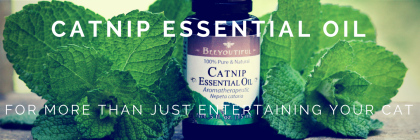#HowToTuesday- Catnip #EssentialOil from Beeyoutiful.com (1)