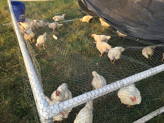 2014_october_farm