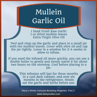 Mullein Garlic Oil recipe from Mary's Winter Immune-Boosting Regimen Pt 2 from Beeyoutiful.com